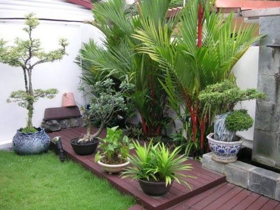 Pohon Palem Untuk Hiasan Taman Minimalis (1)