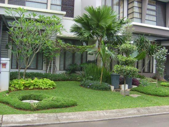 pohon hias palem cocok untuk taman rumah minimalis