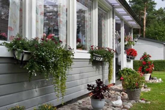 Bunga Untuk Dekorasi Teras Rumah