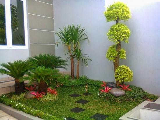 Pohon Palem Untuk Hiasan Taman Minimalis (26)